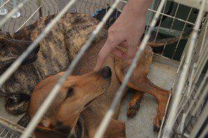 Evento busca renda para castração de animais (Foto: Imagem Ilustrativa)