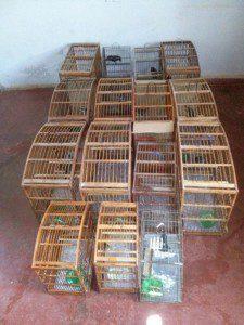 15 pássaros foram apreendidos