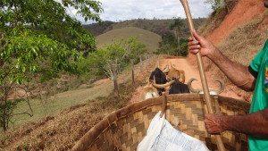 Projeto têm feito ações em prol da sustentabilidade do território