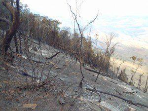 Incêndio no último sábado (10) consumiu 155 hectares da mata (foto: Van Gogh)