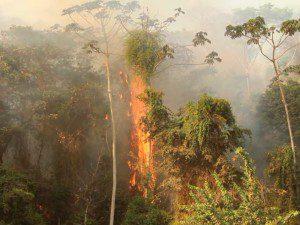 Foco de incêndio foi registrado na tarde de domingo (18)
