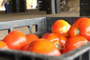 Apesar de clima desfavorável para a produção de tomates, preço não foi alterado, conforme afirma o Ceasa