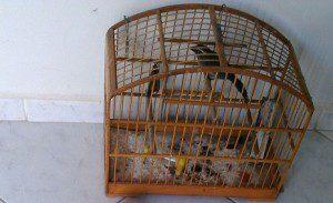 Pássaro encontrado na casa do suspeito
