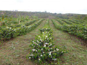 Propriedade de Gilmar antes da seca (foto: Arquivo Pessoal)