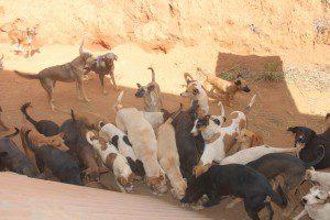 150 cães foram levados para o Centro de Zoonoses