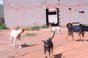 Direção procura abrigo para os cães, enquanto isso o impasse continua