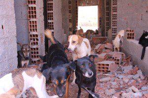 Mesmo sem infraestrutura no local, a direção da associação pretende permanecer com os cães no Centro de Zoonoses