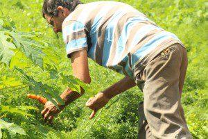 Batista orgulha-se de ser um produtor sustentável