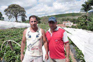 Weliton e Welisson estão satisfeitos com o cultivo de morangos