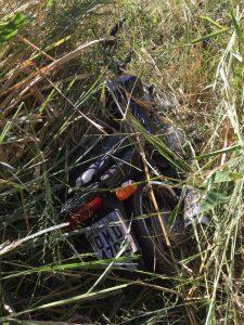 Moto foi encontrado em um matagal